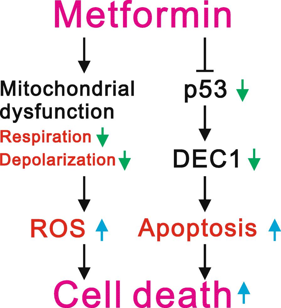 Dangers of Metformin | McKay Law