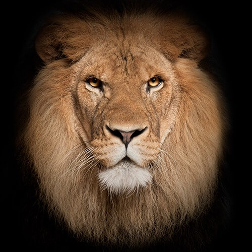 Lion Fearless | Personal Injury Settlements | Mckay Law | Personal Injury Lawyer